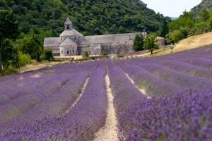 La Abadía Notre Dame de Sénanque y los campos de lavanda. ¿Puede haber algo más mediterráneo? Foto de Flickr de Rafael Conde.