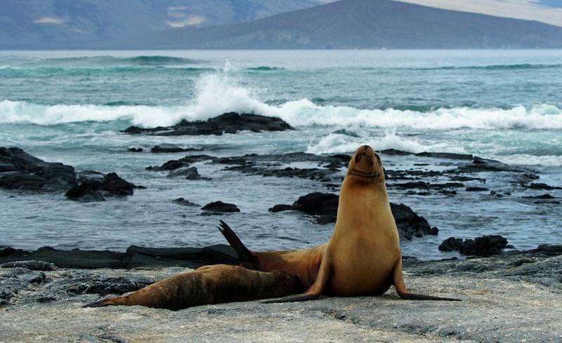 Cruceros por las Islas Galapagos